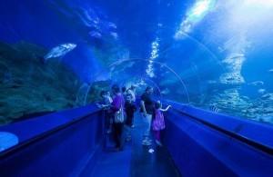 Les plus grands aquariums du monde