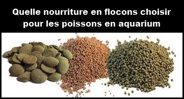 Quelle nourriture choisir pour les poissons en aquarium for Alimentation poisson aquarium