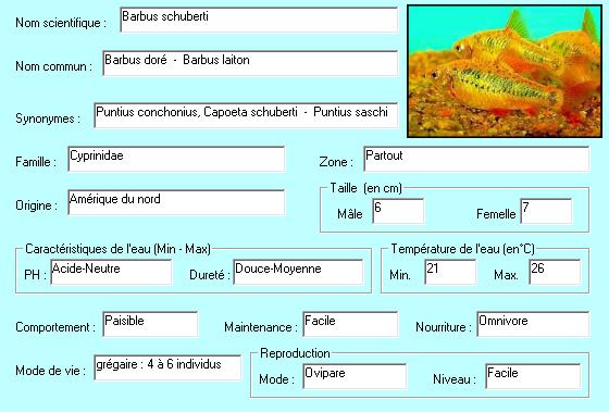 Poisson Barbus schuberti