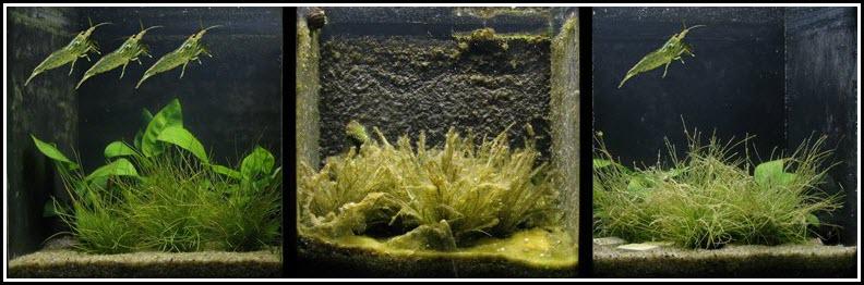 controle-algues