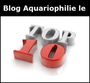 top-10-aquariophilie