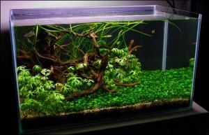 Comment réaliser un aquarium aquascape avec un 28 litres