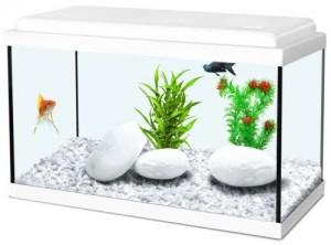 aquarium-nanolife-kidz-50