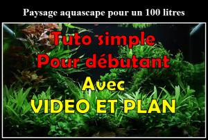 Comment réaliser un aquarium aquascape avec un 100 litres..