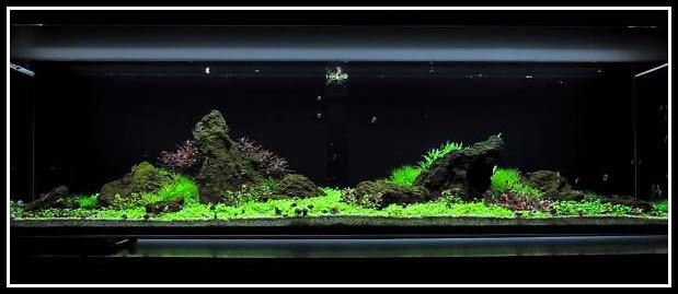 Comment réaliser un paysage aquascape avec un 225 litres...