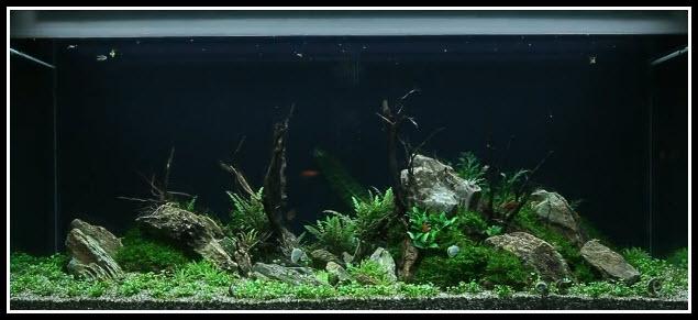 aquarium-300-litres-52-1-jour