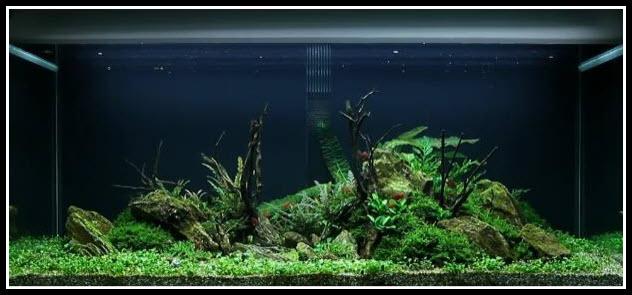 aquarium-300-litres-52-10-jours (2)