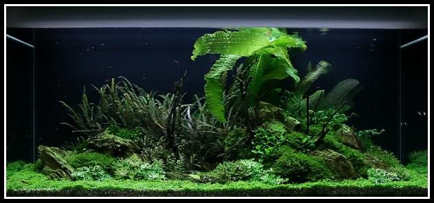 aquarium-300-litres-52-10-jours (4)