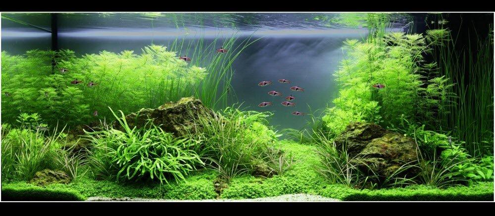 aquarium-01-180_litres