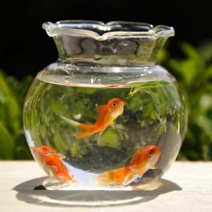 aquarium-bol