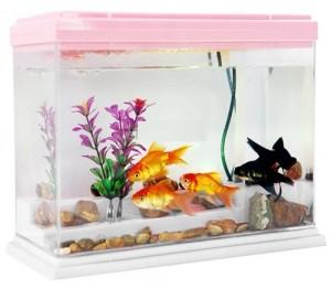 aquarium-plastique