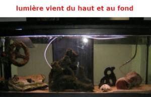 eclairage-aquarium