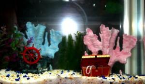 Comment bien choisir une pompe pour votre aquarium