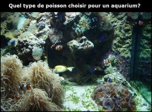Quel type de poisson choisir pour un aquarium?