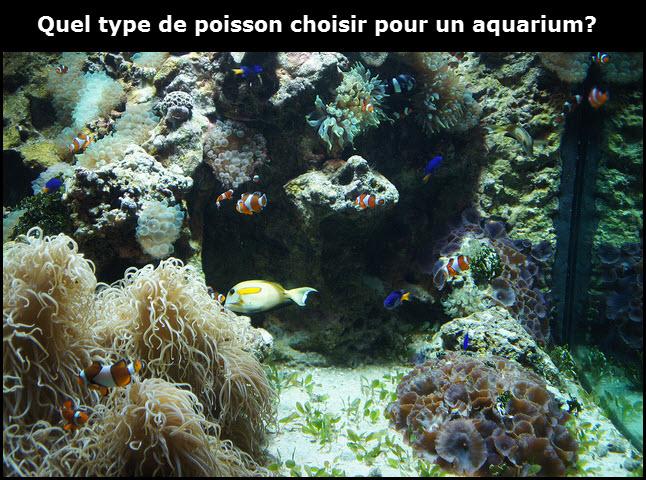 Quel type de poisson choisir pour un aquarium for Quel type de gazon choisir