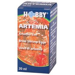 oeufs-artemia