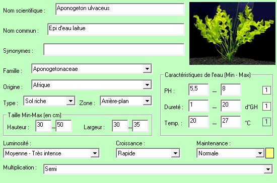 Aponogeton ulvaceus