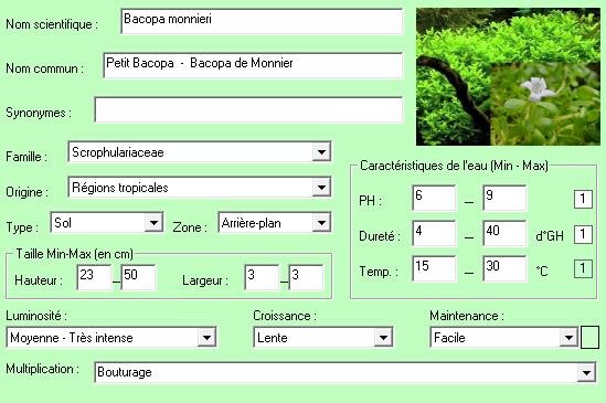 Bacopa monieri plante aqquarium