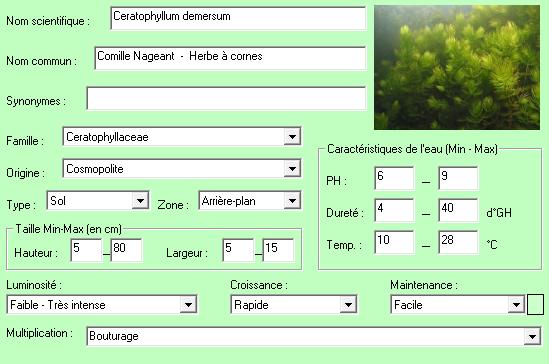 ceratophyllum-demersum-descriptif