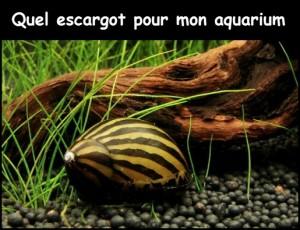 Les escargots pour un aquarium d'eau douce