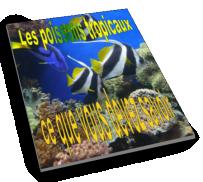 Les poissons tropicaux ce que vous devez savoir