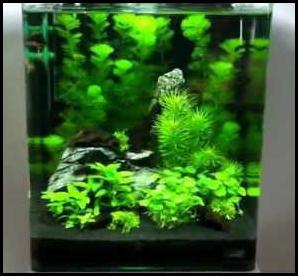 nano-aquarium-1
