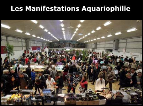Manifestations francophone sp cial aquariophilie for Site aquariophilie