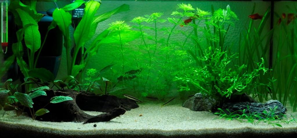 Comment réaliser un paysage aquascape avec un aquarium 54 litres
