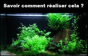 Comment réaliser facilement un paysage d'aquascape