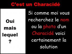 characide