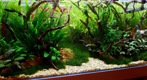 Comment réaliser paysage aquascape dans un 360 litres