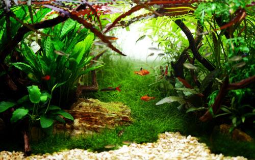 aquarium-32-360-litres
