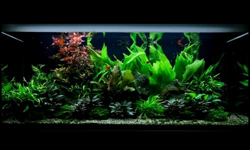 aquarium-48-300-litres-04