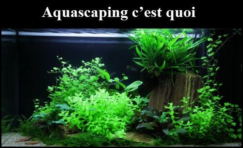 L'aquascaping c'est quoi ?
