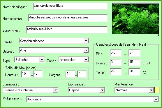 Plante aquatique Limnophila sessiliflora