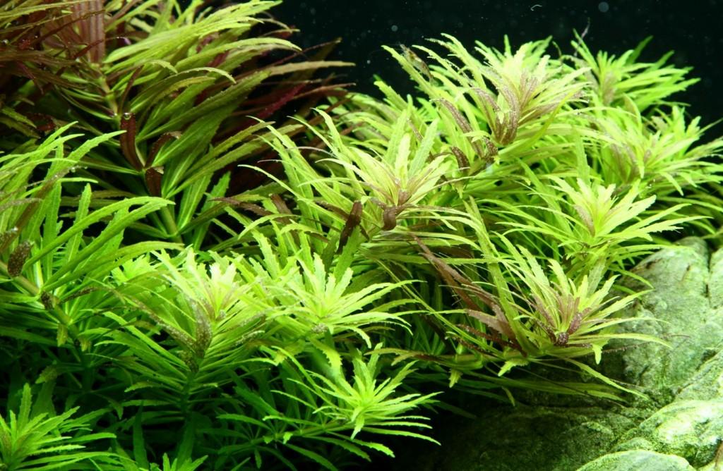 Comment réaliser un paysage aquascape avec un aquarium 100