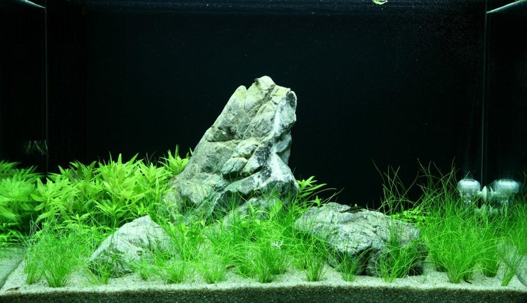 aquarium-100-100-litres-2