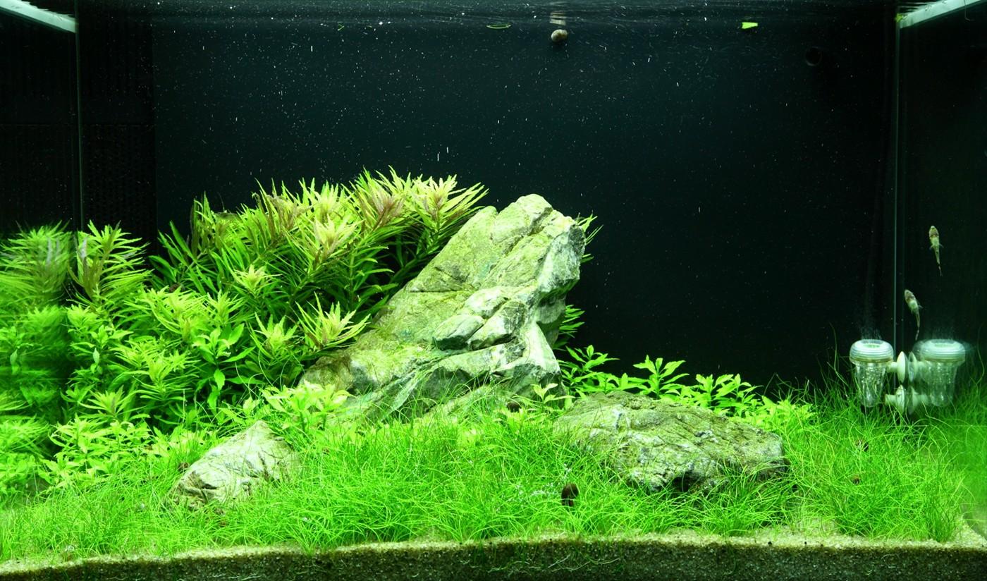 Comment R 233 Aliser Un Paysage Aquascape Avec Un Aquarium 100