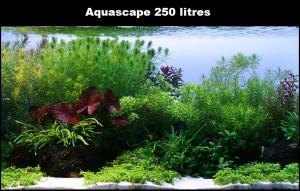 Réaliser un paysage aquascape avec un aquarium de 250 litres