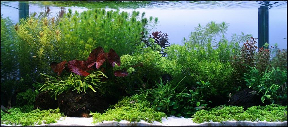 Comment réaliser un paysage aquascape avec un aquarium de 250 litres