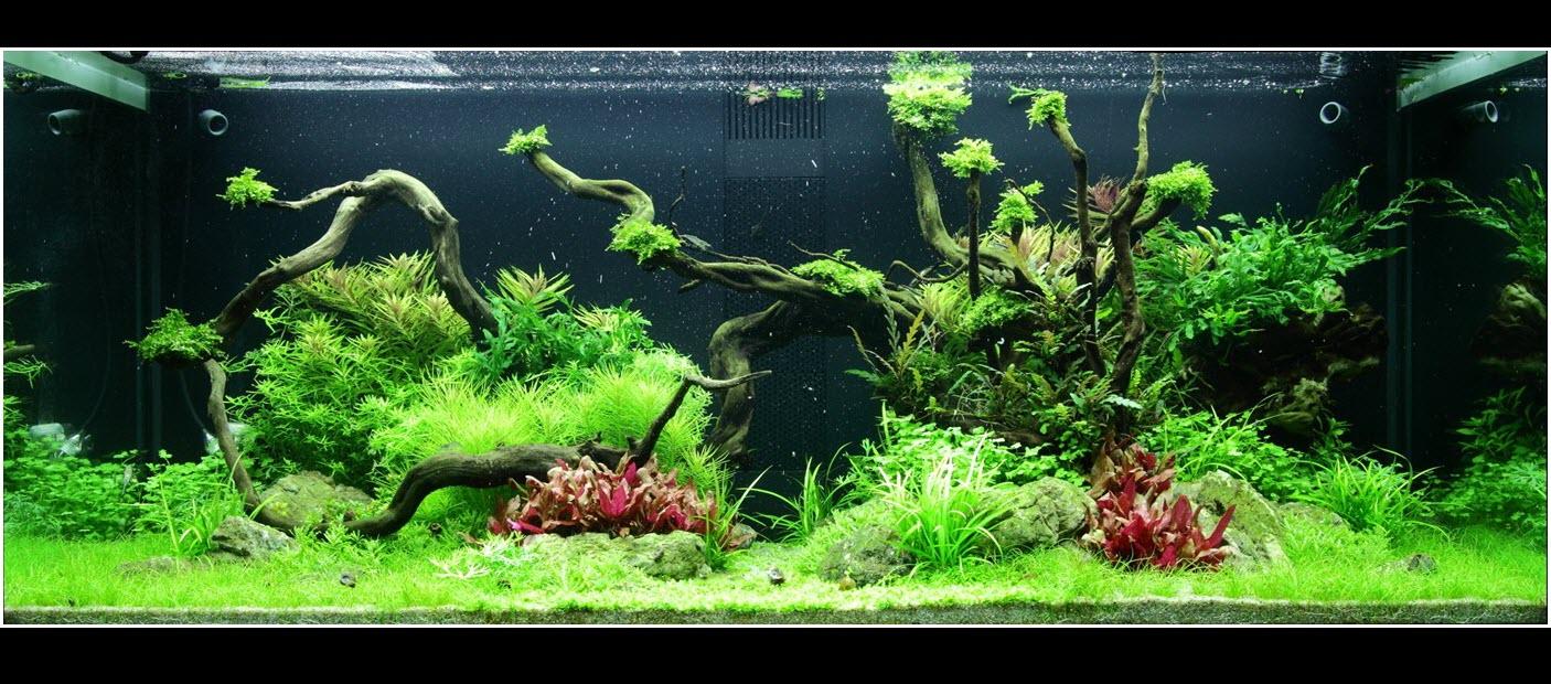aquarium-96-300-litres-05