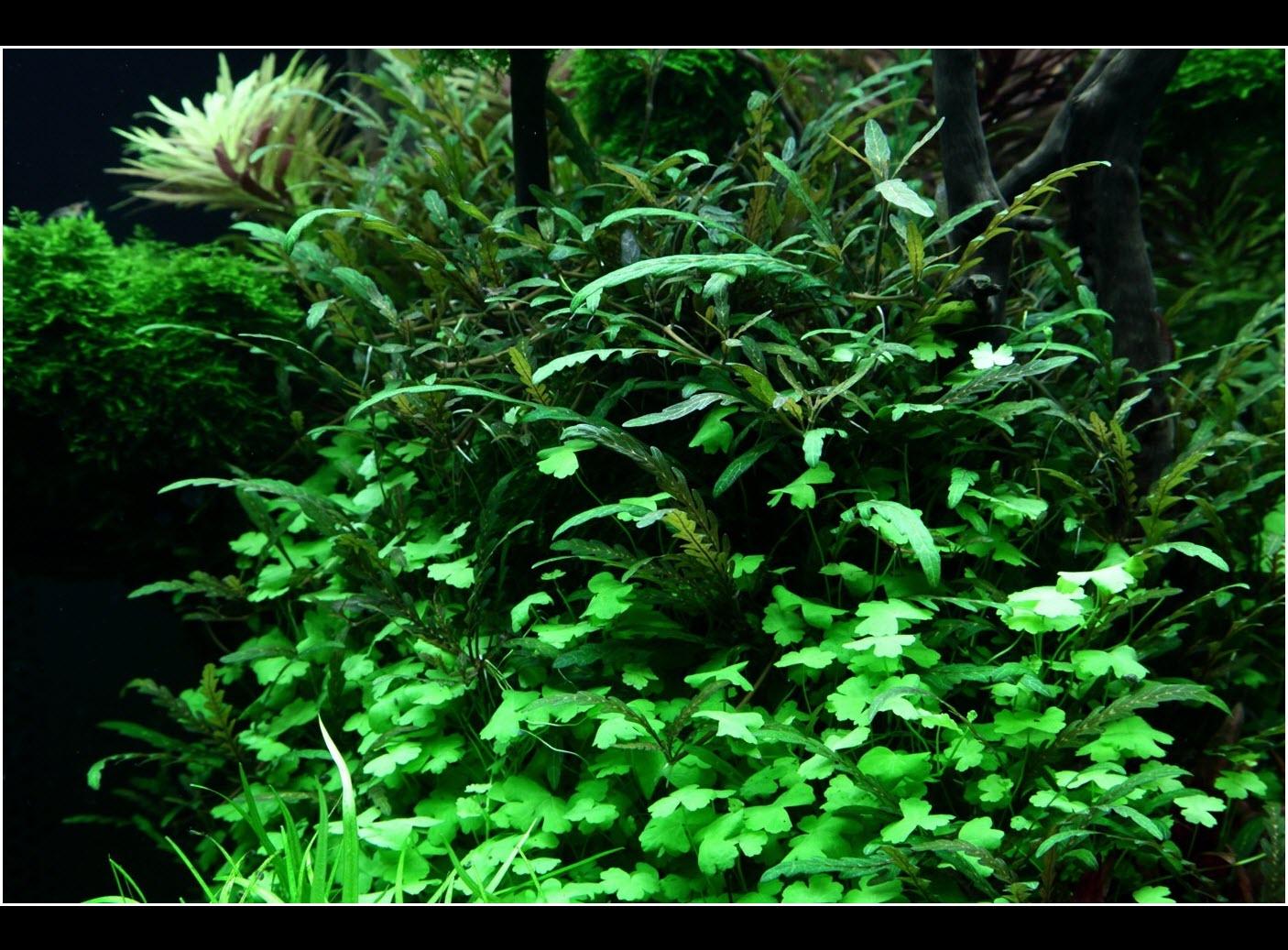 Comment réaliser un aquarium aquascape dans un 300 litres