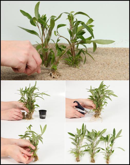 Comment réaliser vos plantations facilement !