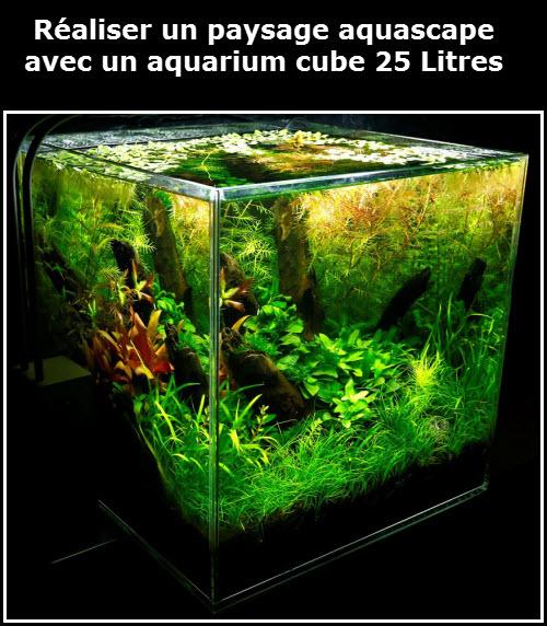 Réaliser facilement un paysage aquascape avec un aquarium de 25 litres