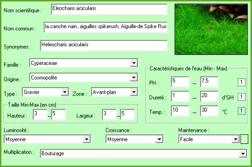 Plante aquatique Eleocharis acicularis