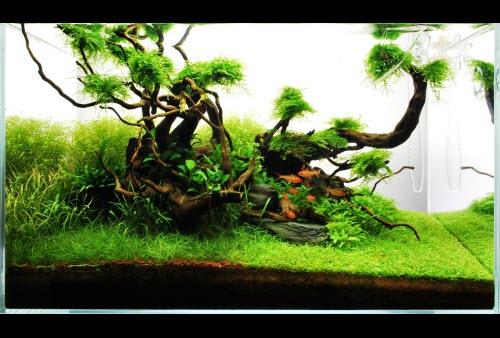 Comment réaliser un aquarium aquascape avec un 60 litres