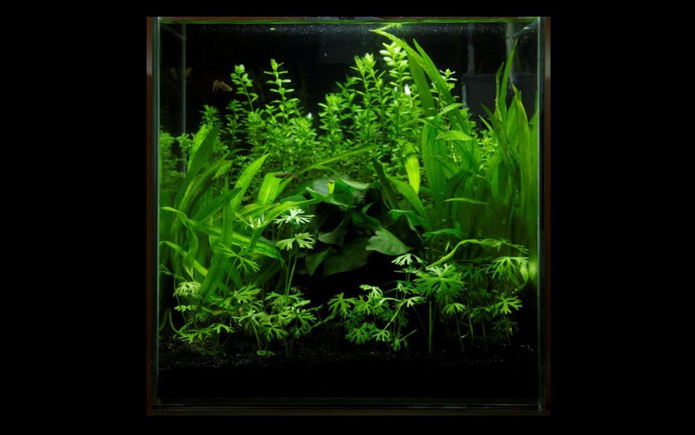 aquarium-aquascape-27-litres-00