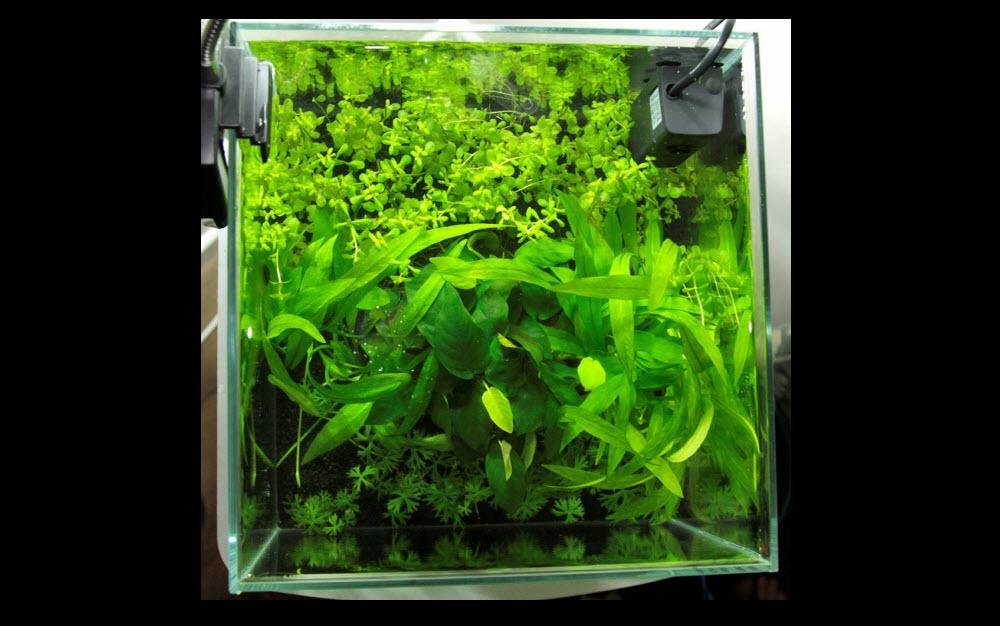 aquarium-aquascape-27-litres-01