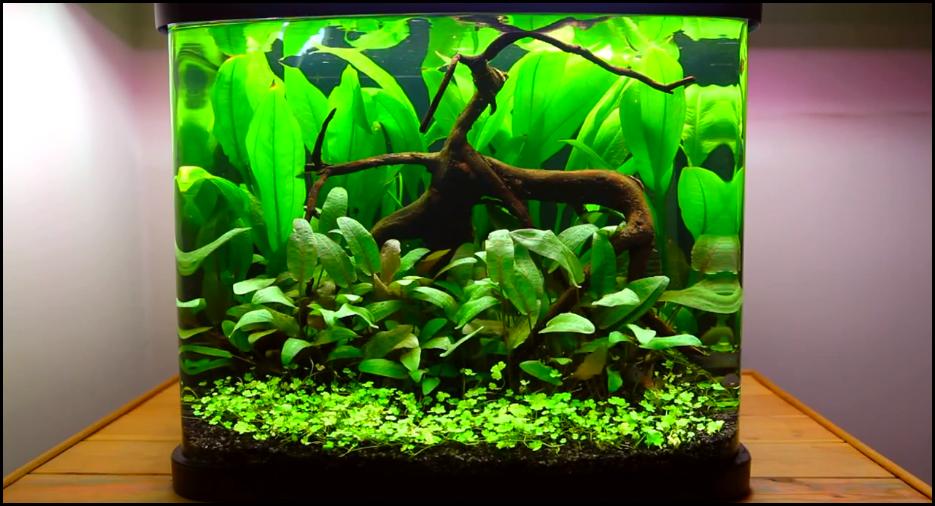 Comment réaliser un paysage style hollandais avec un aquarium de 48 litres