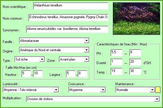 Plante aquatique Echinodorus tenellus